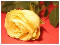 Тепло души твоей живет в словах.  Спасибо Ларочка.  С улыбкой к тебе.