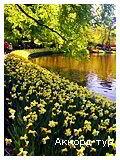 День 4 - Амстердам - Гаага - Делфт - Кекенхоф - Роттердам