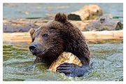 День 1 - Львів – озеро Синевир – Реабілітаційний центр ведмедів – Пилипець – Закарпаття
