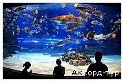 День 3 - Будапешт - купальни Сечени - Мукачево