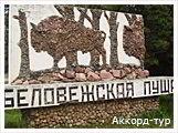 День 6 - Брест - Беловежская Пуща