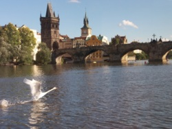Фото из тура Богемное путешествиеКраков, Прага, Карловы Вары, Дрезден и Вена, 08 сентября 2013 от туриста kasha
