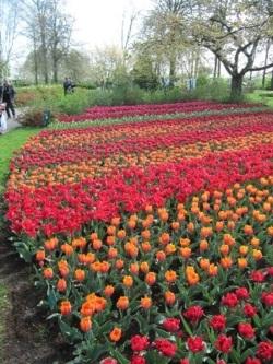 Фото из тура К восторгу без границ: Амстердам + Брюссель!, 06 апреля 2014 от туриста Алена