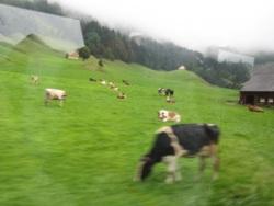 Фото из тура В гармонии с природой, 28 июня 2014 от туриста Ann