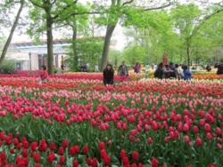 Фото из тура Амстердам и Париж… зажег и привлек…, 27 апреля 2014 от туриста tyagunmarina