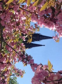 Фото из тура Пражские деньки… хрустальные, 26 апреля 2015 от туриста Алина