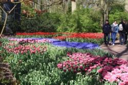 Фото из тура Счастливы вместе. Амстердам, Брюссель, Париж!Ангелы Запада, 25 апреля 2015 от туриста lidija