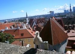 Фото из тура Балтийские берега Вильнюс, Рига, Таллин +Стокгольм!, 09 августа 2015 от туриста Елена