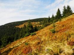 Фото из тура Карпатских гор перезвон, 11 сентября 2015 от туриста Анна