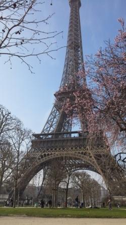 Фото из тура А я в Париже! + Диснейленд!, 08 марта 2015 от туриста ketrinleo