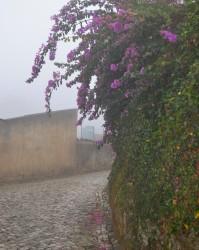 Фото из тура Клубника с ПортвейномЗнакомство с Португалией, 27 сентября 2015 от туриста Вероника
