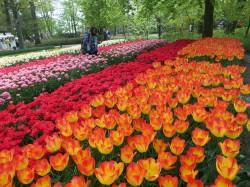 Фото из тура Яркий Бенилюкс: Нидерланды, Бельгия и Люксембург!, 03 мая 2016 от туриста musicа