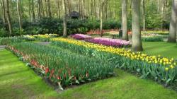 Фото из тура Счастливый Случай…Амстердам, Брюссель, Люксембург и Париж!, 25 апреля 2016 от туриста flower