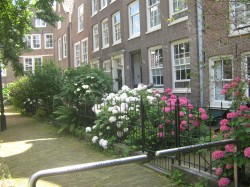 Фото из тура Больше, чем любовь. Отпуск в Амстердаме, 02 июля 2016 от туриста Оптимистка