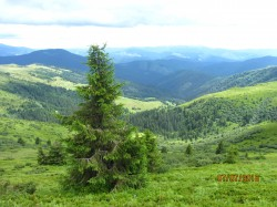 Фото из тура Карпатских гор перезвон, 02 июля 2016 от туриста NNatala