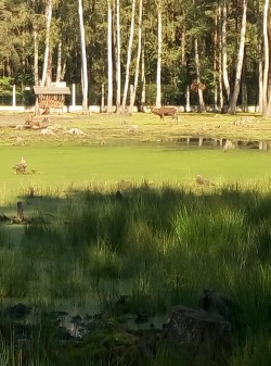 Фото из тура «Сказания Волыни»…с отдыхом на Шацких озерах!!!, 20 августа 2016 от туриста Kofta