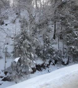 Фото из тура Свежесть родников Закарпатья… зимнее настроение, 31 декабря 2016 от туриста Lana25