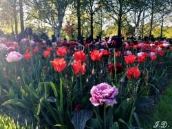 Фото из тура Амурные приключенияв Амстердаме и Париже!!!, 08 мая 2017 от туриста Irina Dear