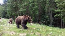 Фото из тура Свежесть родников Закарпатья, 24 июня 2017 от туриста Vesna