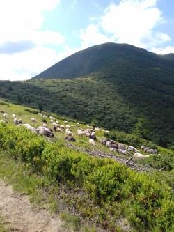 Фото из тура Карпатских гор перезвон, 17 июля 2017 от туриста Марина