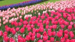 Фото из тура Париж, цветы... и Комплименты!Амстердам, Брюссель, Париж, Люксембург, Кельн, 20 апреля 2017 от туриста Алёнка
