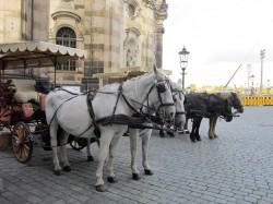 Фото из тура Столичный уикенд: Варшава, Берлин, Дрезден, Прага, Краков!, 11 октября 2017 от туриста Алла