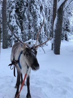 Фото из тура Невероятные приключения у Санта Клауса, 28 декабря 2017 от туриста marikurochka