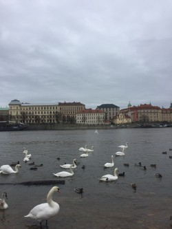 Фото из тура Пражское дежавюПрага + Вена, 04 января 2018 от туриста marg_rt