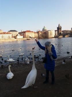 Фото из тура Душевный УикендКраков, Прага, Вена, Будапешт + Эгер, 22 февраля 2018 от туриста kate4ka