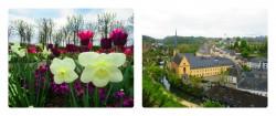 Фото из тура Королевские лучики - БеНиЛюкс: Нидерланды + Бельгия + Люксембург!!!, 30 апреля 2017 от туриста Артур