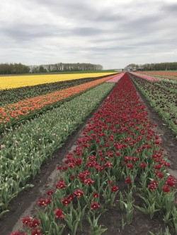 Фото из тура Миг счастья в Амстердаме, 25 апреля 2018 от туриста Ann