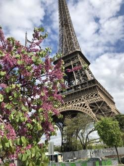 Фото из тура Амстердам и Париж… зажег и привлек…, 27 апреля 2018 от туриста Anna