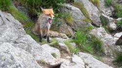 Фото из тура Ahoooj Словакия, привет Закарпатье, 24 июня 2018 от туриста Foxes