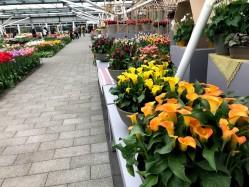 Фото из тура Здравствуй, милый... или 3 дня в Амстердаме!, 12 апреля 2019 от туриста Лариса