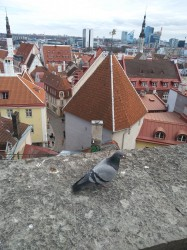 Фото из тура Балтийские берега Вильнюс, Рига, Таллин +Стокгольм!, 09 апреля 2019 от туриста Юля