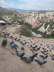 Фото из тура Любовь и тонкий винный аромат…, 25 апреля 2019 от туриста Аня