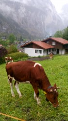 Фото из тура Швейцарское фондю: вся Швейцария и Австрия!!!, 17 мая 2019 от туриста Тетяна