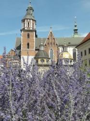 Фото из тура Знакомьтесь - Германия: Берлин + Потсдам + Дрезден + Краков!, 25 июля 2019 от туриста elena