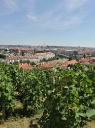 Фото из тура Душевный УикендКраков, Прага, Вена, Будапешт + Эгер, 24 июля 2019 от туриста Liza