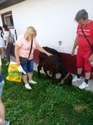 Фото из тура Свежесть родников Закарпатья, 29 июля 2019 от туриста Ольга