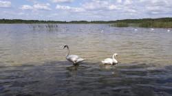 Фото из тура Сказания Волыни…с отдыхом на Шацких озерах!!!, 30 ноября -0001 от туриста Огійша