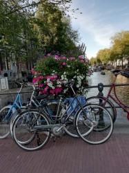 Фото из тура Амстердам - больше, чем любовь...4 дня в Амстердаме, 19 августа 2019 от туриста Найдич Анна