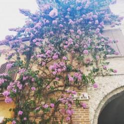 Фото из тура Сочный викенд:Верона, Рим, Венеция!, 25 августа 2019 от туриста Len_chik