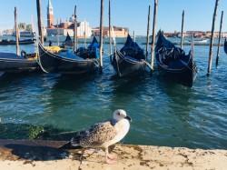 Фото из тура Венеция - город на воде!Вена, Верона и Будапешт..., 01 сентября 2019 от туриста Irusik11