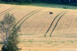 Фото из тура Сердце Севера - фьорды3 фьорда, 5 столиц,Ледник Нигардсбрин, Язык Тролля и БергенВыезд из Киева, 06 августа 2019 от туриста alex_zh