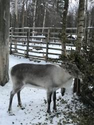 Фото з туру Зустріч з Сантою в Лапландії!, 28 грудня 2019 від туриста Julia