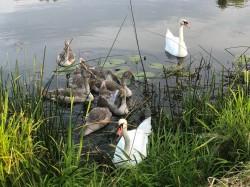 Фото из тура Сказания Волыни…с отдыхом на Шацких озерах!!!, 17 июля 2020 от туриста olgas