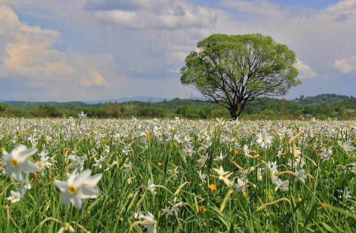 Чтобы увидеть настоящий праздник цветов, не обязательно отправляться за пределы страны.