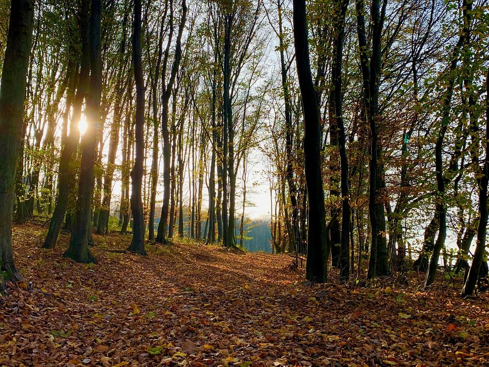 Віденський ліс, Австрія