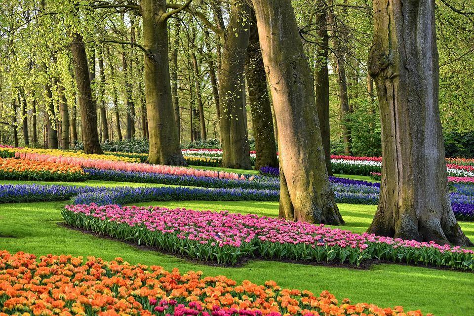 Кекенхоф, Нідерланди